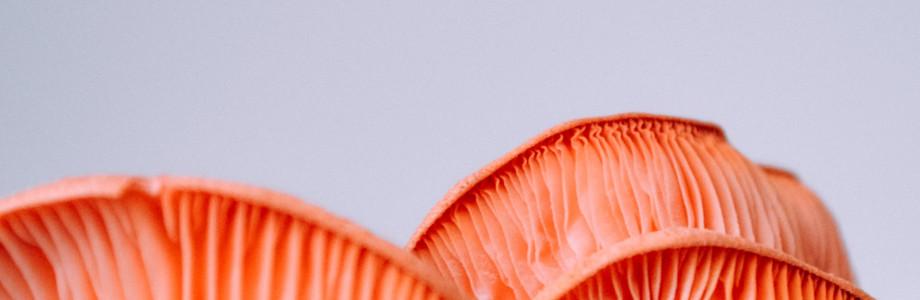 Грибы: Трюфельный медовик, ризотто с белыми грибами